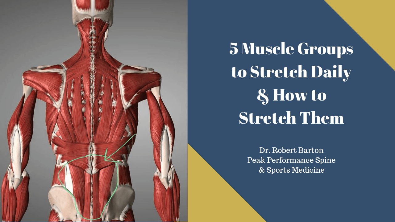 Stretching Muscle Groups